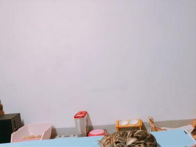 格蕾寢飾 Great Living - 涼感抑菌防水平面式保潔墊-粉漾素色 (雙人) by Ting-Yi Lu
