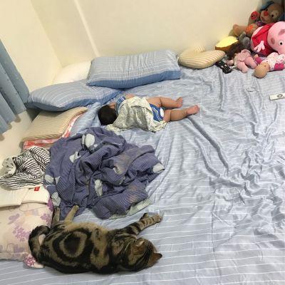 PureOne - 吸濕排汗天絲-海芋戀-雙人四件式床包鋪棉被套組 by 洪佩芬